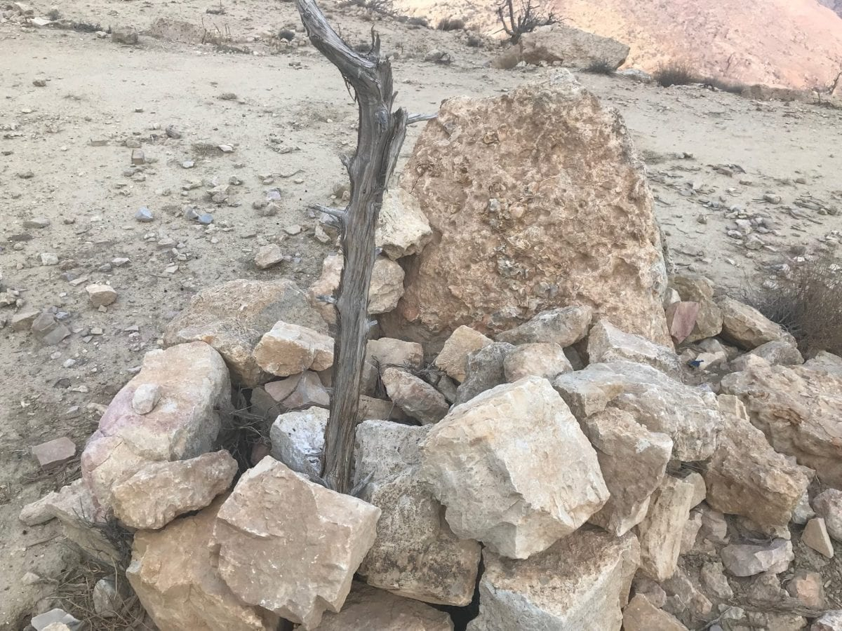 Jordan Trail - Dried out well at Qutla Ruins.