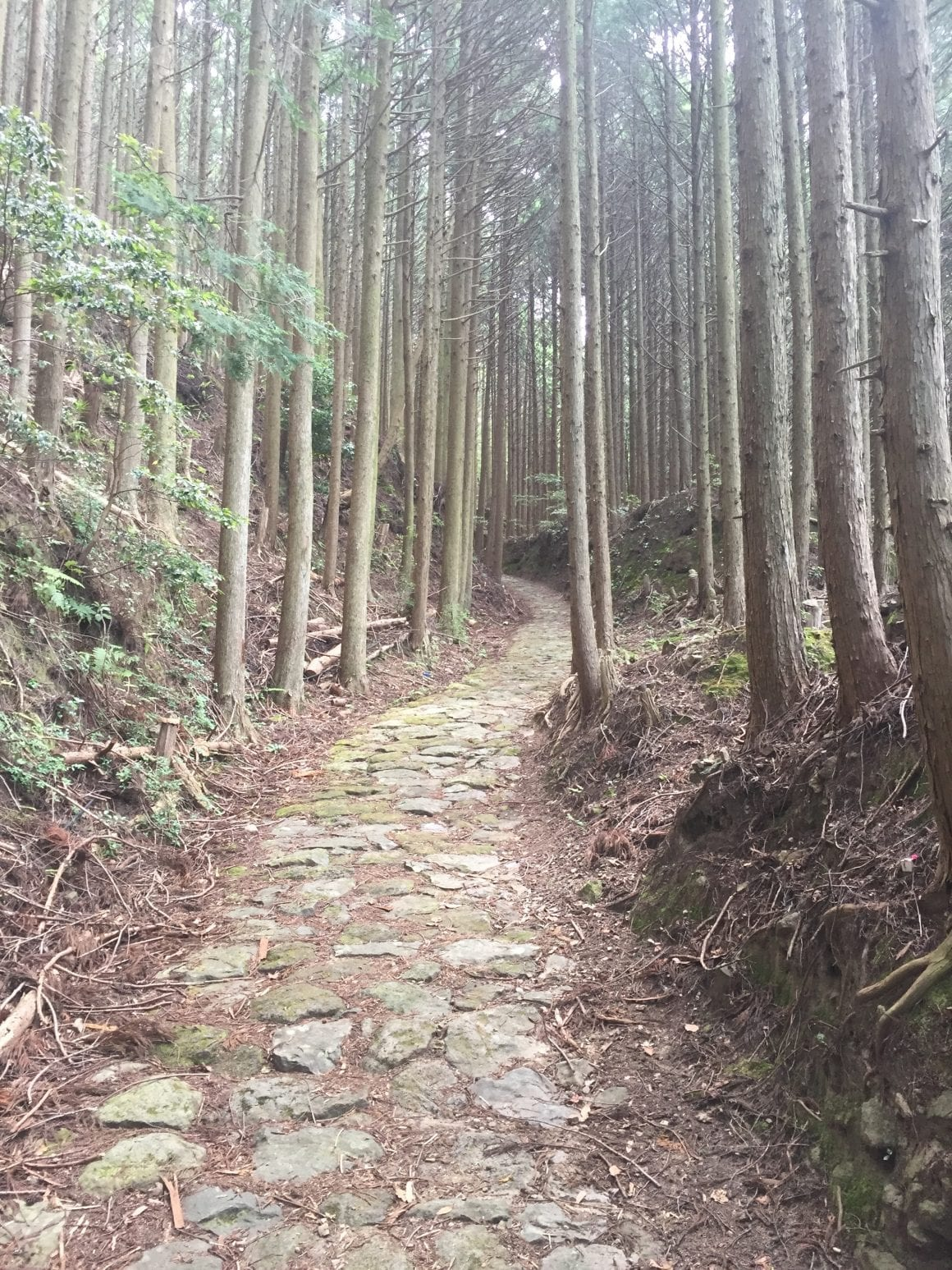 Kumano Kodo Beautiful Roads