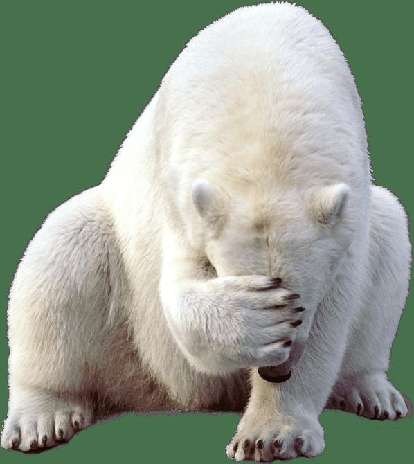 Polar bear face palm